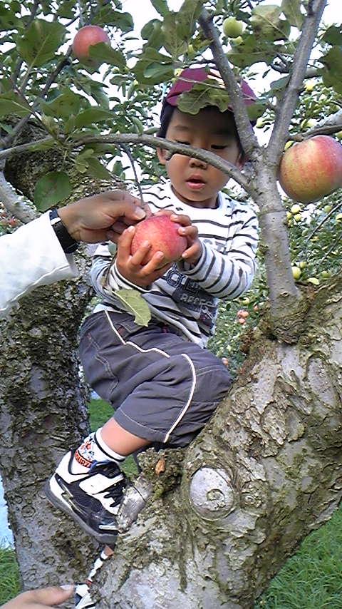 りんごもぎ